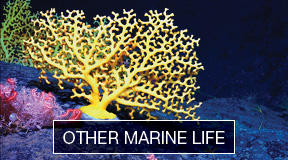 Other Marine Life