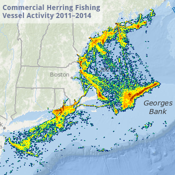 Herring Vessel Activity Map