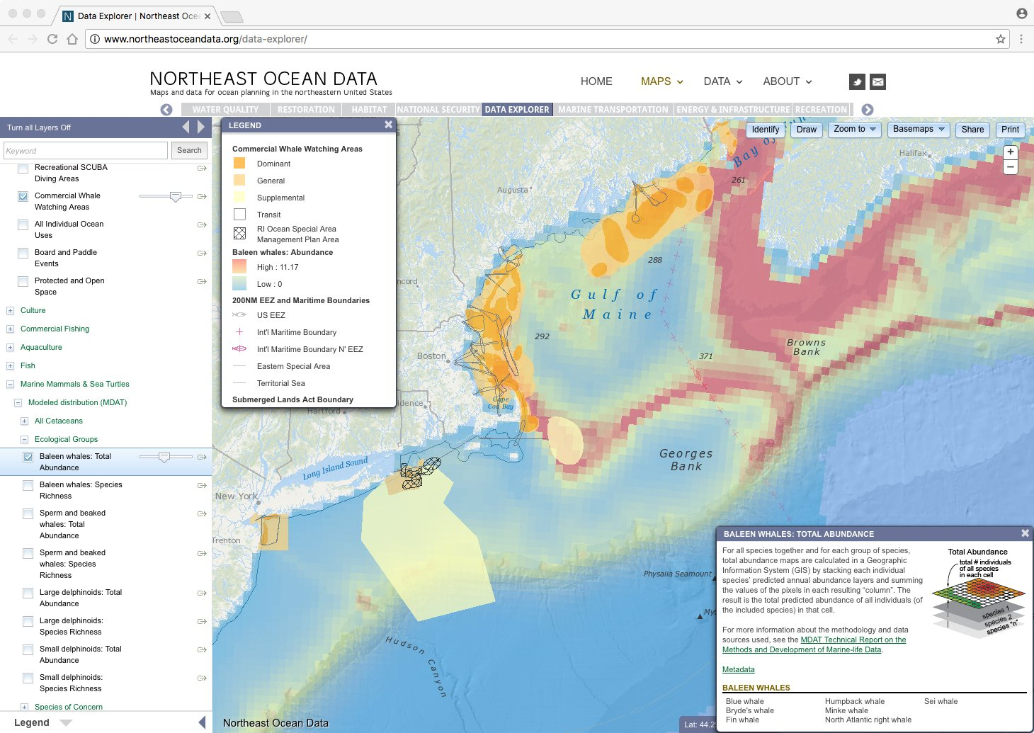 Screenshot: Map of baleen whale abundance with commercial whale watching areas