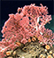 Balancing Deep-Sea Coral Protection and Commercial Fisheries