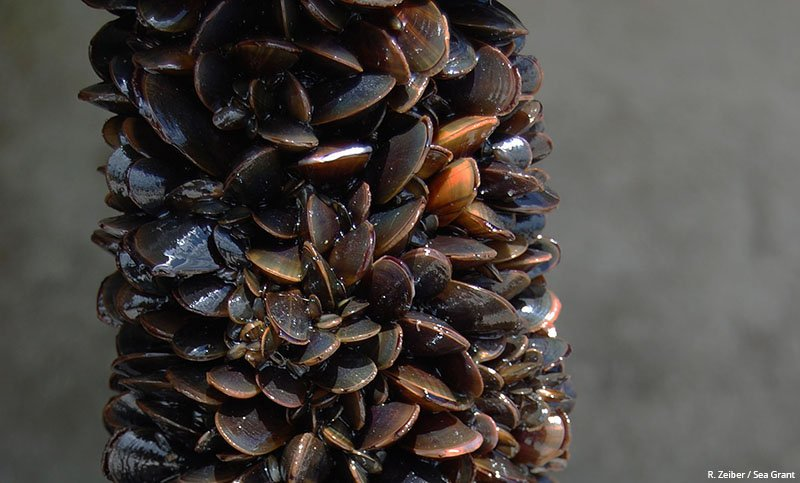 New methods for cultivating blue mussels could provide an economic boost for local communities.