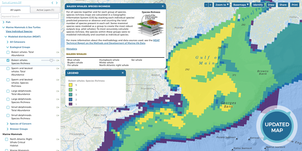 Screenshot of Baleen Whale Map