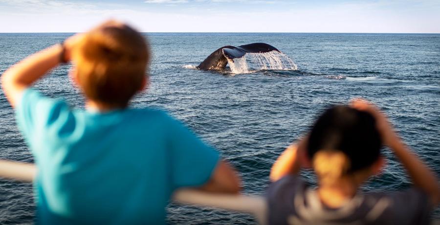 Whale watching near Cape Cod. (Photo credit: Matt McIntosh / NOAA)